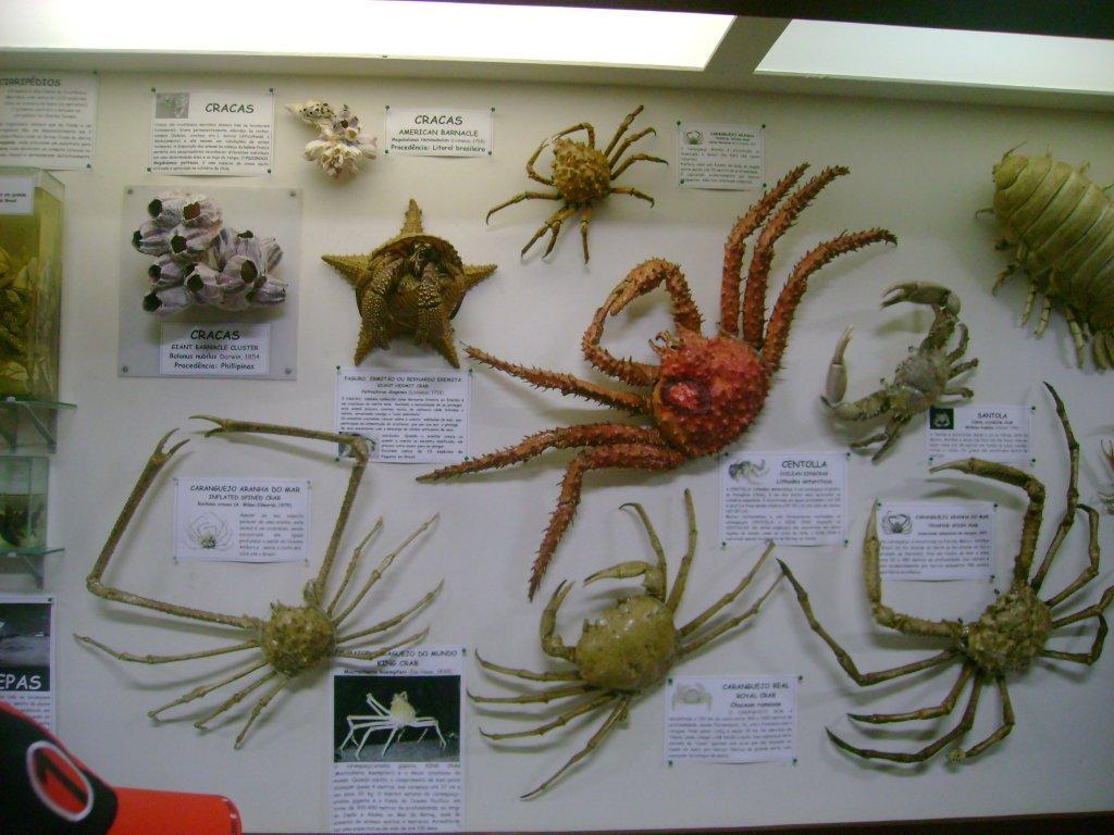 Biologia Marinha Wallpaper Aos Temas Biologia Marinha