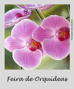 feira orquideas
