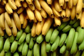 -bananas