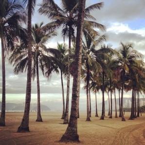 palmeiras do Gonzaga